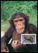 Sierra Leone MK Singe Chimpanzé Chimpanzee Monkey CARTE MAXIMUM CARD MC cm ba49