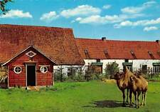 Belgium Meli Park Adinkerke de Panne Kamelen Camels