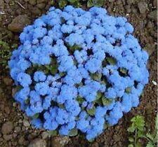 Ageratum - Blue- 200 Seeds- Bogo 50% off Sale