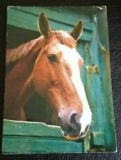 POSTCARD; G669; ANIMAL SERIES; HORSE; UN POSTED