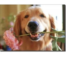 Golden with Pink Flower Dog Blank Card - Greeting Card by Avanti Press