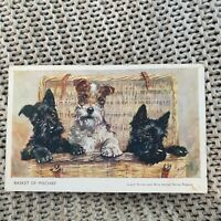Basket of Mischief - Terriers - Vintage Postcard
