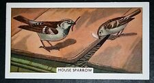 House Sparrow     Vintage Illustrated Card   VGC