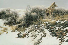 """Coyote and Winter Sage - By Robert Bateman LTD Giclee on Canvas size 27"""" x 40"""""""