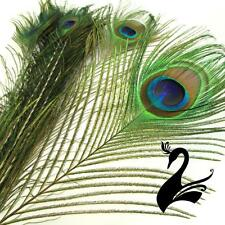 Feather Peacock Eye - Natural 90-100cm - Large Eyes (Pack of 10) - Craft Milline