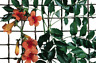 TENAX RETE QUADRA 50 VERDE MT0,5X5 per balcone orto e giardino