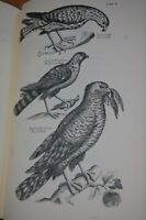 1678 ORNITHOLOGY of FRANCIS WILLUGHBY 78 plts FACSIMILE SLIPCASE WILLOUGHBY 1972