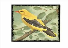 Golden Oriole Vintage  Wall Plaque Cage Bird Picture Sluis Aviary Sign