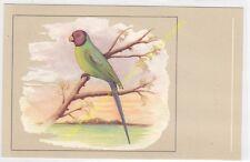 Oiseau Bird Perruche tête de prune Palaeornis cyanocephalus n58