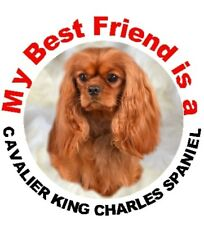 2 Cavalier King Charles Ruby Car Stickers By Starprint