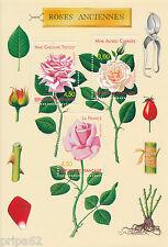 DCC - Timbre de France Bloc  N° 24  Neuf ** Roses Anciènnes