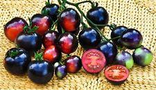 Tomato Seeds 15 - Indigo Blue - Rare Heirloom