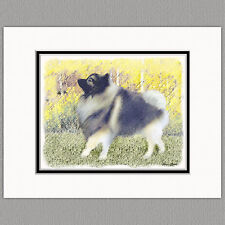 Keeshond in Aspen Original Art Print 8x10 Matted to 11x14