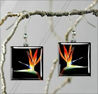 FLOWER BIRD OF PARADISE SQUARE GLASS CABOCHON EARRINGS nu76yt