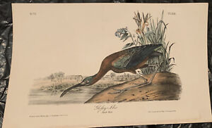 AUDUBON'S BIRDS of AMERICA  -  GLOSSY IBIS -  First Edition Octavo Plate 358
