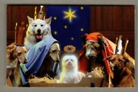 Dogs in Manger Christmas Gift Card Holder Sleeve with Envelope Holiday Avanti