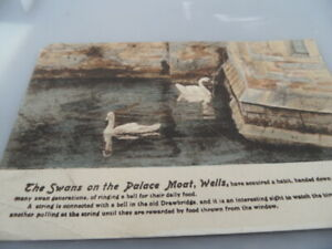 Wells Somerset  Swans on Palace Moat  FRITH'S   VINTAGE POSTCARD  GOOD CONDITION