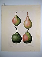 1800 Duhamel / Bessa: Poirier commun (pears) - hand-finished stipple engraving 3