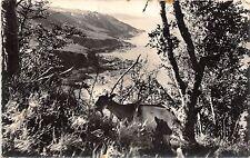 BR12317 Hague Les Falaises de Greville chevre goat real photo france