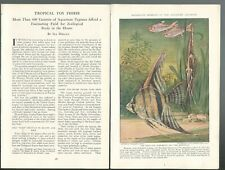 1931 Tropical Fish magazine article, color art, aquariums