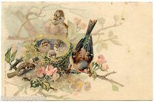 NID D'OISEAUX. BIRDS NEST