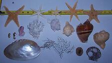Mixed Rare Starfish, Coral, Dried Sea life Shells Craft collector Decor Lot 22-L