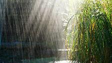 NATURAL SOUNDS CD FALLING RAIN, RAINFALL, DOWNPOUR, HEAVY RAIN, NATURE, RELAX