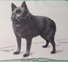 1967 RARE named SCHIPPERKE Dog Calendar Page 1967  Art  Will Rannells