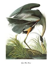 "1978 Vintage AUDUBON BIRDS ""GREAT BLUE HERON"" Color Art JUMBO Lithograph"