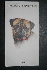 PUG    1920's Vintage Dog Portrait Card  VGC