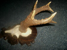MOUNTED 6 POINT ROE BUCK DEER ANTLERS SKULL Carved Oak Shield TAXIDERMY LOT 5