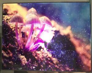 8.5 X 11 Inch Metallic Luster Photo W. Frame HD Wall Art Nature Spores Mushrooms