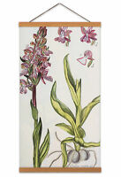 Biodiversity Flower Diagram Green-winged Orchid Canvas Wall Art Print Poster