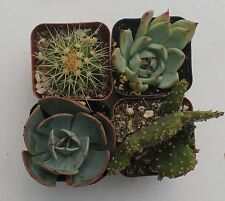 """2 SUCCULENT 2 CACTI COLLECTION 4 ROOTED SPECIMENS IN 2"""" POTS AND SOIL"""
