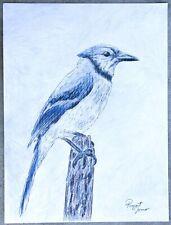 """Blue Jay Bird"" by Rupert Jones, ORIGINAL Drawing Hand Signed - Large 18x24 Size"