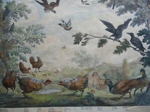 1686 Birds on Village Common H/col Etching aft Francis Barlow. RARE!!