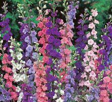 50+ DELPHINIUM IMPERIAL CHOICE MIX FLOWER SEEDS / LARKSPUR / DEER RESISTANT