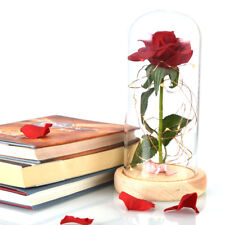 Red Rose in a Glass Dome Home Lamp Decoration Beauty and the Beast Enchanted