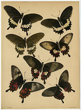 Antique Print-BUTTERFLIES-LINNEAN SOCIETY-ALFRED RUSSEL WALLACE-2-Westwood-1865