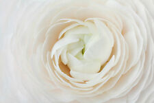 BEAUTIFUL WHITE FLOWER CANVAS PICTURE #54 STUNNING FLORAL HOME DECOR A1 CANVAS
