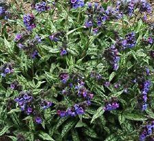Spring Full Shade Light Watering Plants & Seedlings