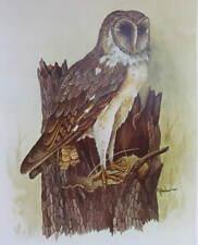 vintage E. Rambow Barn Owl