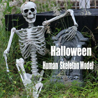Halloween Party Decoration Human Skull Skeleton Model Decor Human Bones Prop US