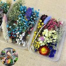 DIY Assroetd getrocknete Blumen gepresste Blätter für die Herstellung von Epoxid