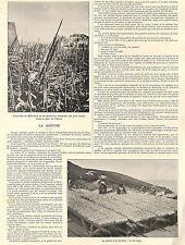 """BELLE-ILE-EN-MER QUIBERON """" LA PECHE A LA SARDINE """" ETS AMIEUX FRERES ADP 1898"""