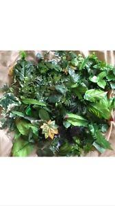 200 Artificial Leaves Fake Silk Foliage Joblot Wedding Florist Christmas Craft