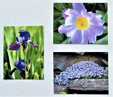 Photograph Original Postcards Set of 3, All Occasions, Blank, Flowers