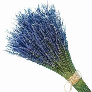 Organical Natural Air Dried California Lavender Flower Bunches - FREE M0K0