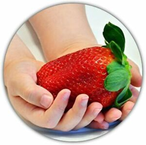 Riesenerdbeeren - Fragaria Ananassa - Erdbeersamen - 50 Samen - Größte Erdbeere