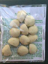 2 PACKS OFERTA ESPECIAL Nuez de la India,100% ORIGINAL & NATURAL nut,indian seed